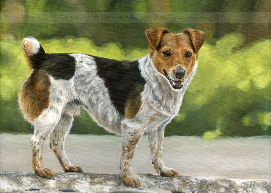 jack russell dog portrait painting in acrylics on canvas