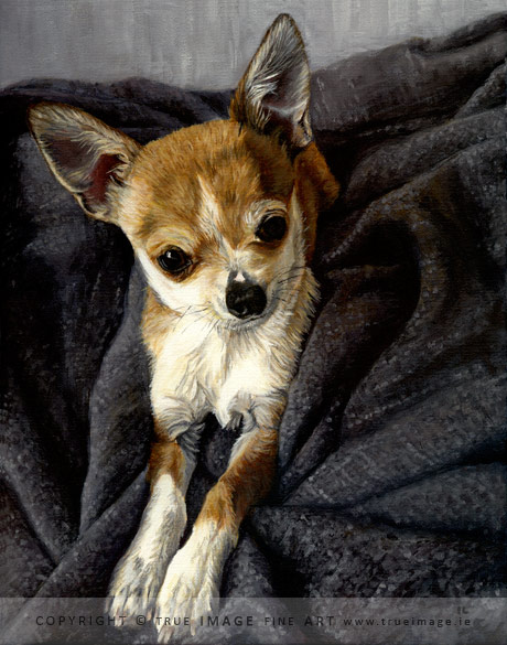 chihuahua portrait painting