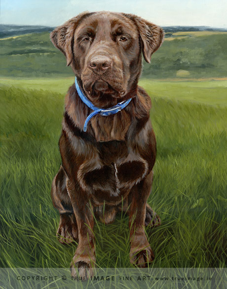 chocolate labrador retriever dog in acrylic