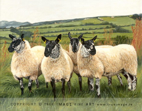 four black and white sheep in a field painting