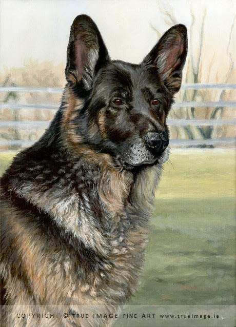 german shepherd portrait painting