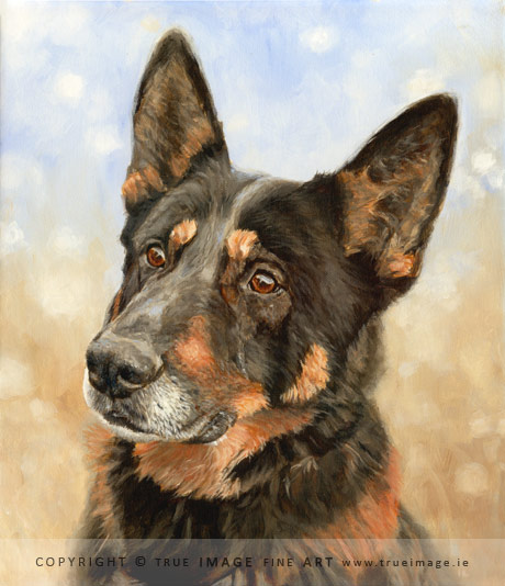 german shepherd portrait in acrylic