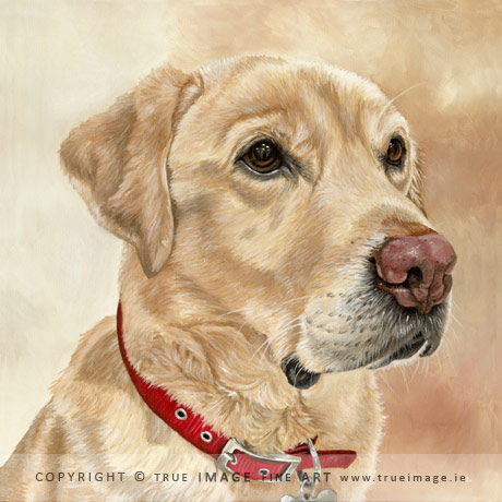 golden labrador portrait painting