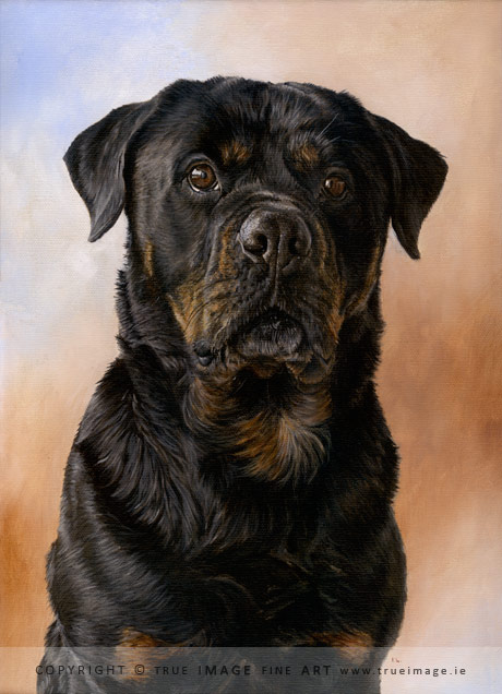 rottweiler dog portrait painting
