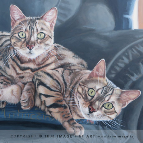 two bengal cats in acrylic