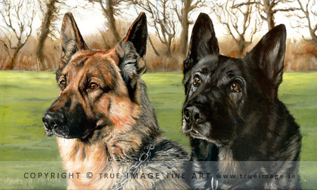 two german shepherds portrait painting