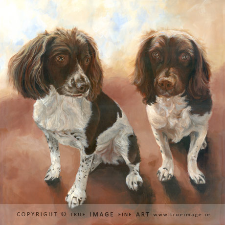 two springer spaniel dogs in acrylic