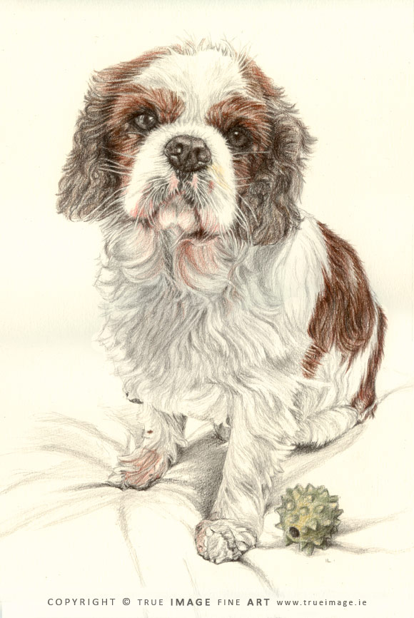 cavalier king charles tinted portrait