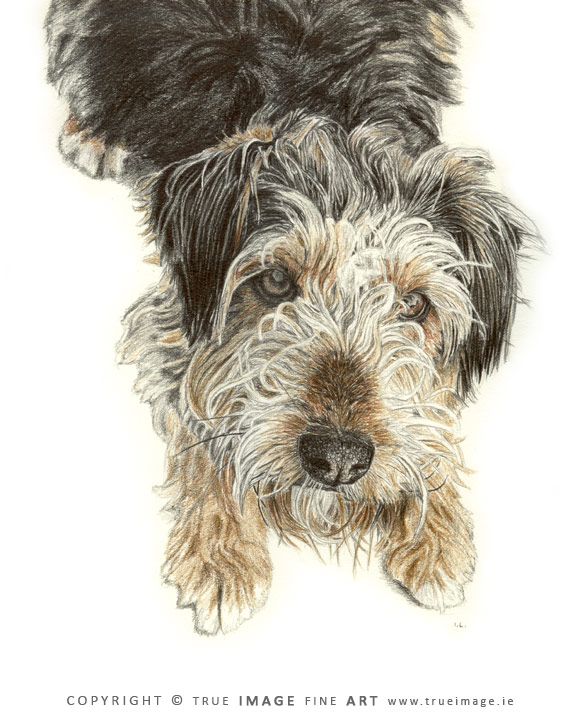 fox terrier tinted portrait