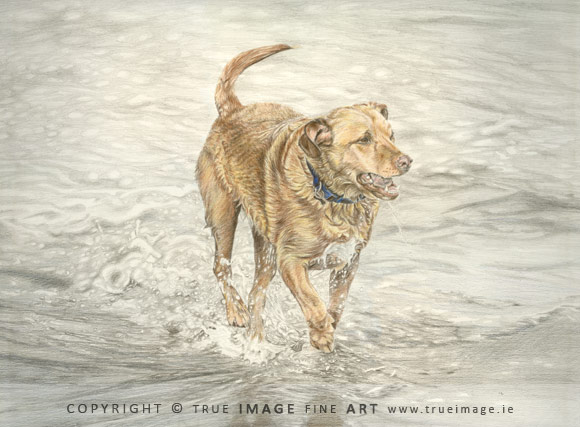 golden labrador tinted portrait