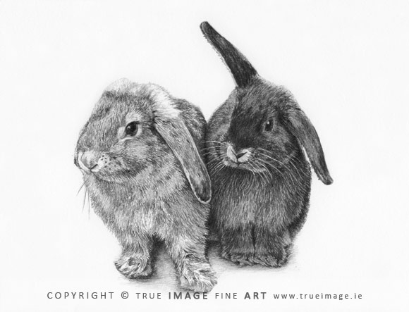 two rabbits portrait in pencil