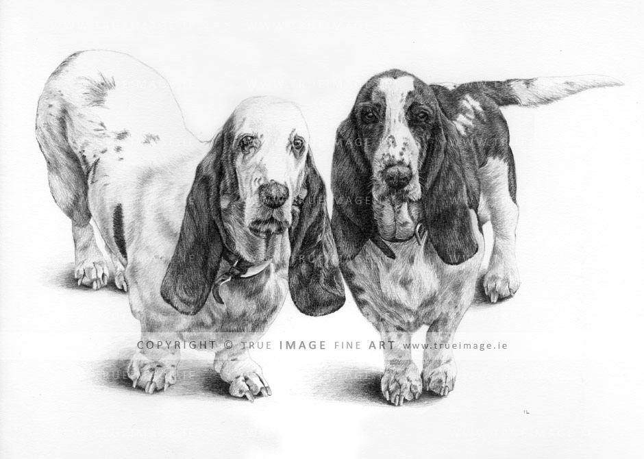 two-basset-hounds-pencil-pet-portrait