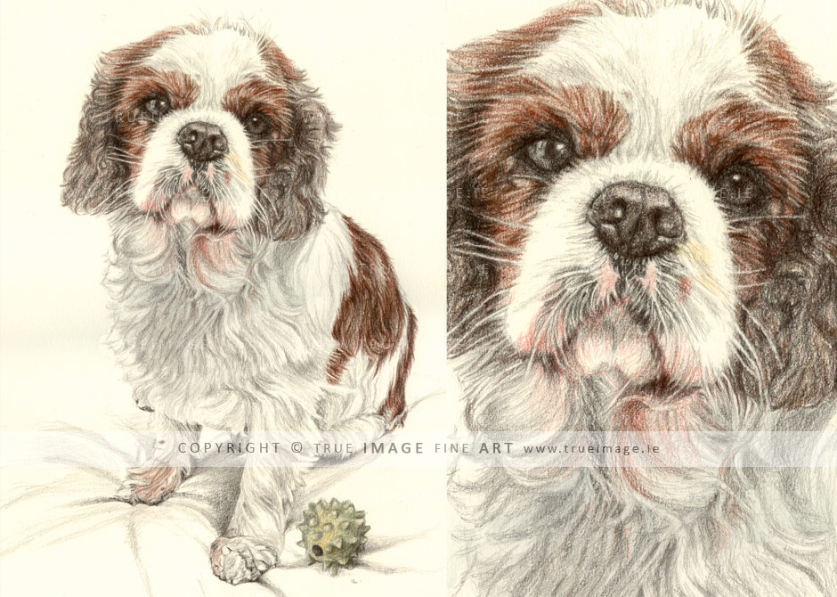 cavalier-king-charles-spaniel-dog-portrait