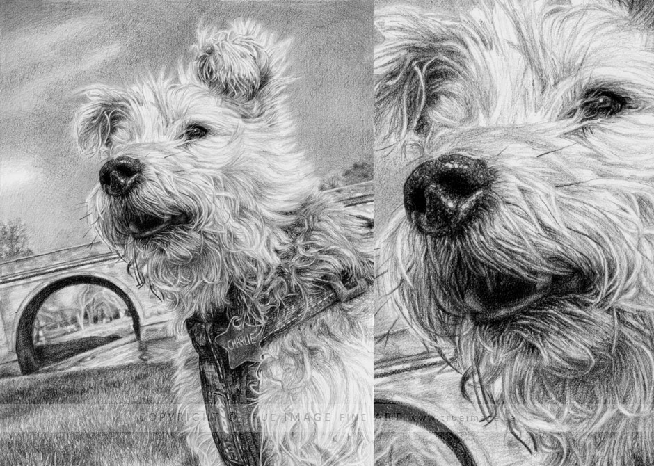 wheaten terrier pencil portrait drawing