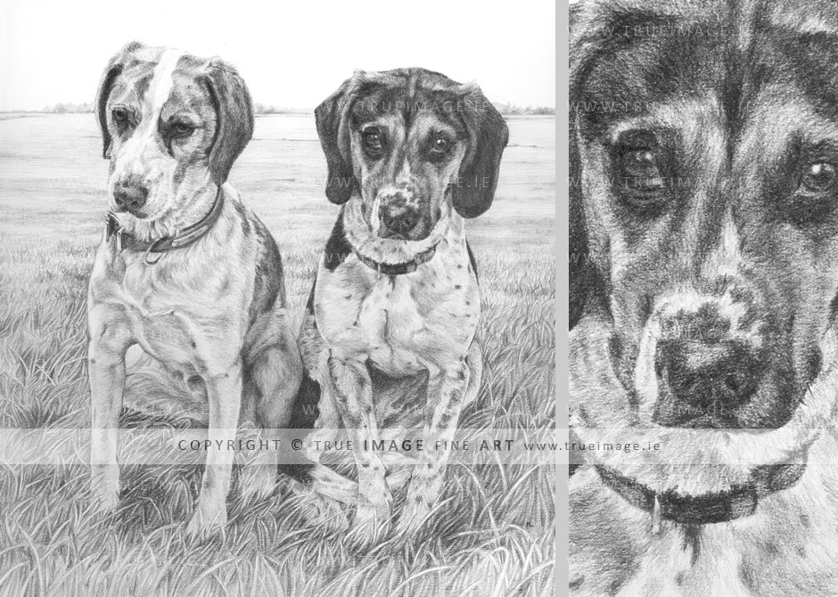 two-beagles-pencil-portrait