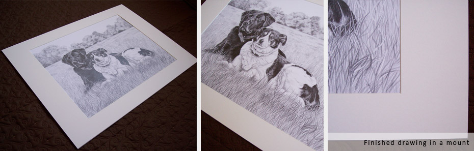 finished mounted drawing of a black labrador and collie