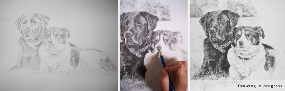 black labrador and collie dog portrait in progress photographs