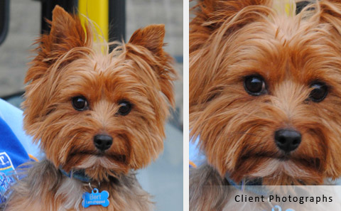 client reference photographs