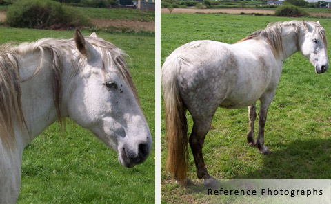 white horse reference photographs