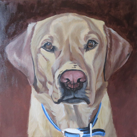 labrador-portrait-progress2