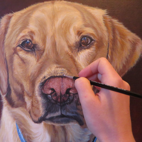 labrador-portrait-progress4