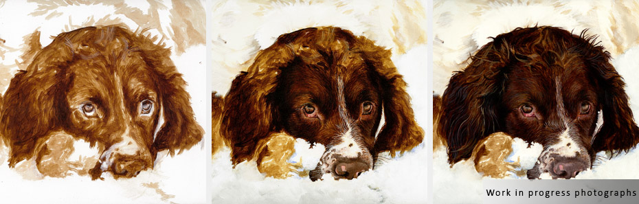springer spaniel portrait in progress photographs