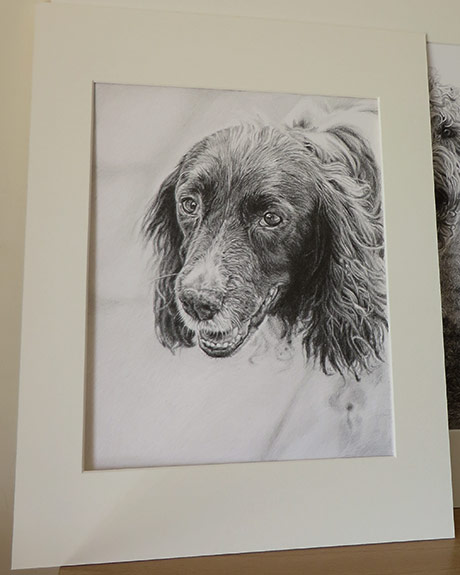 springer-spaniel-pencil-portrait-mounted