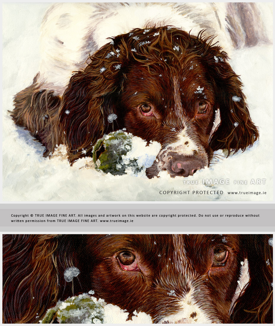 springer spaniel pet portrait in acrylic paints