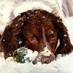 springer spaniel playing in snow dog portrait painting