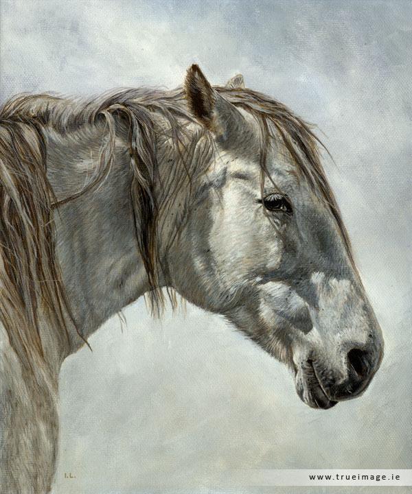 White Horse Painting – TRUE IMAGE FINE ART