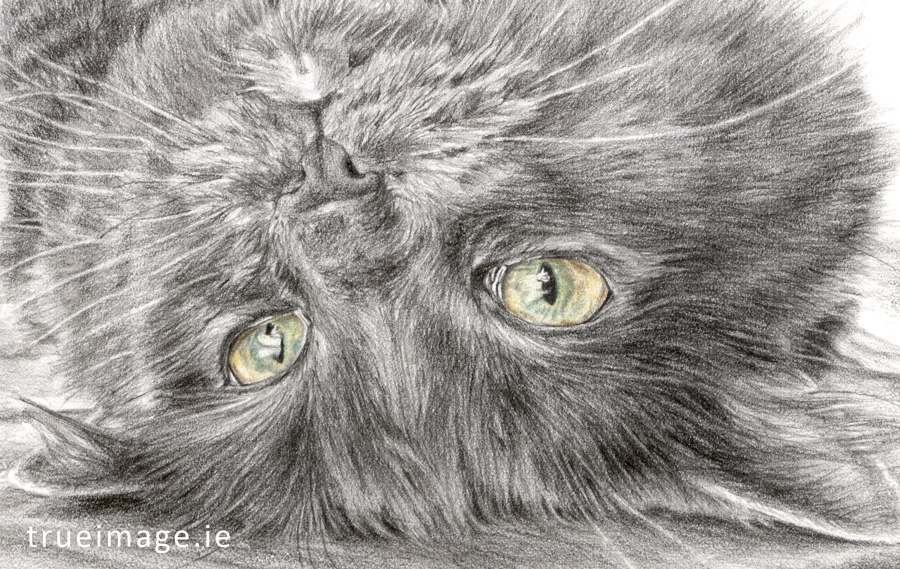 pencil sketch of a cat