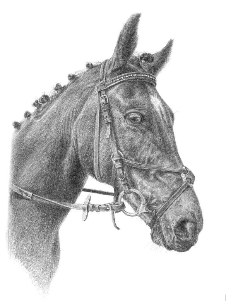 horse drawings ireland